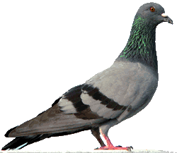 Pigeons Proofing